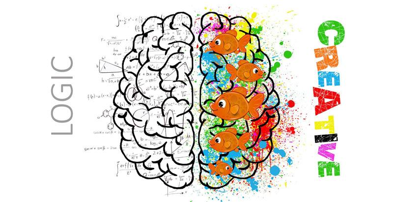 Kích thích 2 bán cầu não là phương pháp dạy trẻ thông minh.