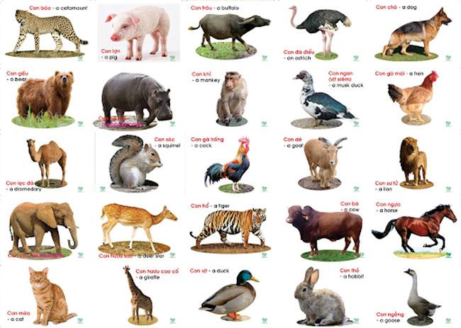 Tiếng Anh mầm non theo chủ đề thế giới động vật rất đa dạng